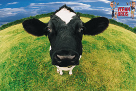 Should you choose a vegan diet? Cow